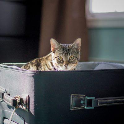 Wat met de kat als je op reis gaat?