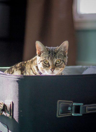 kat in reiskoffer