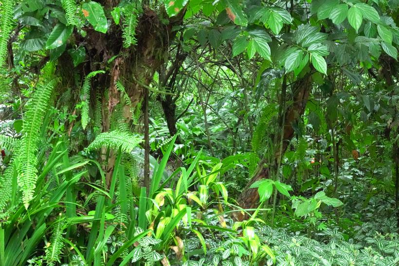 foto van groene bladeren in de regen in de jungle van la Fortuna