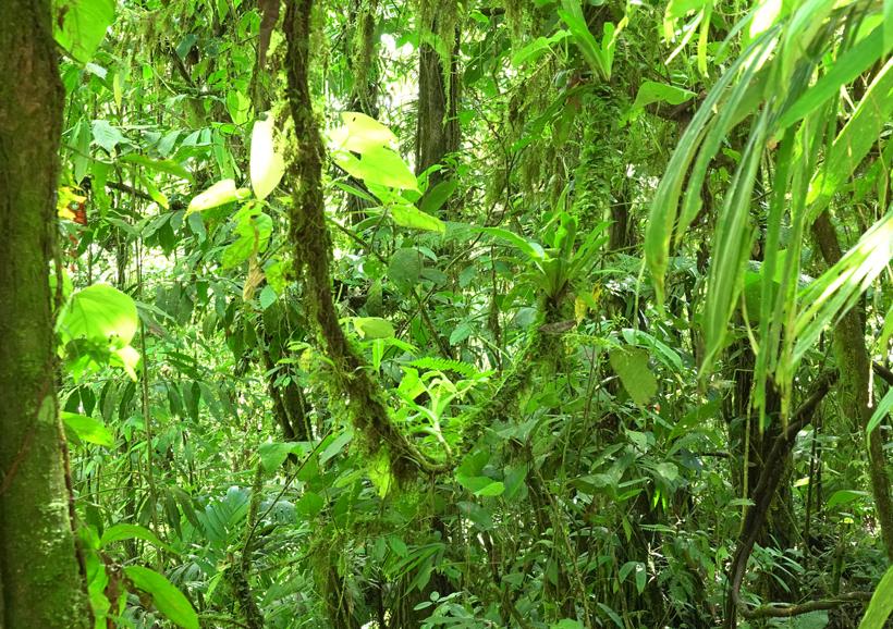 groen regenwoud in la Fortuna