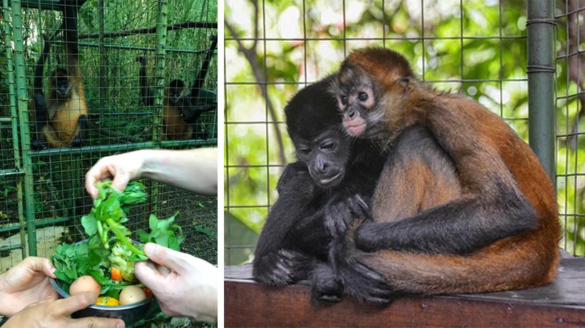 dieren helpen in Proyecto Asis
