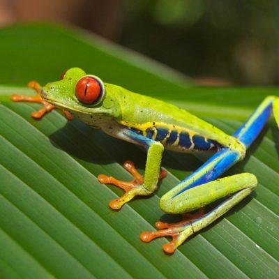 Vertrek naar en aankomst in Costa Rica