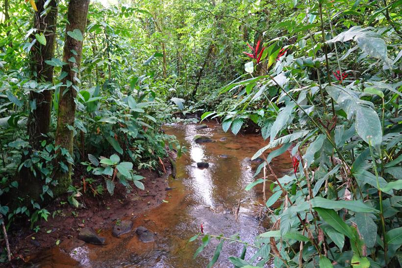 Finca Amistad Cacao lodge rivier