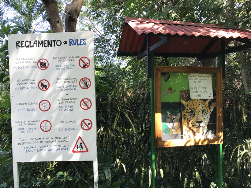 Rules in Centro rescate las pumas