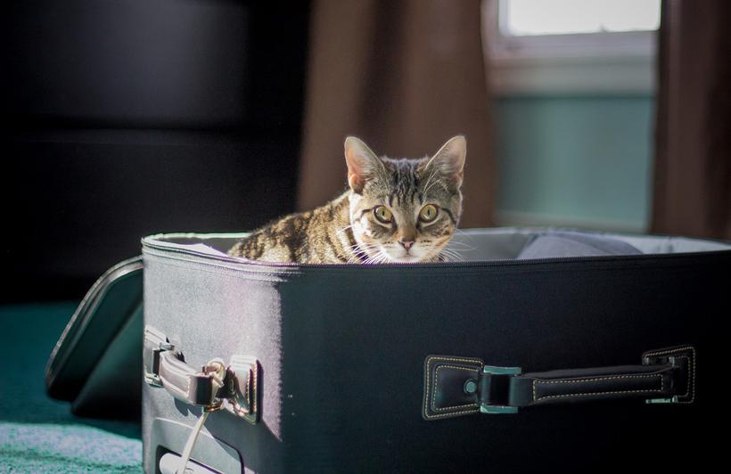 kat in valies