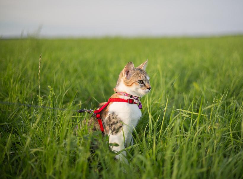 kat op reis aan leiband