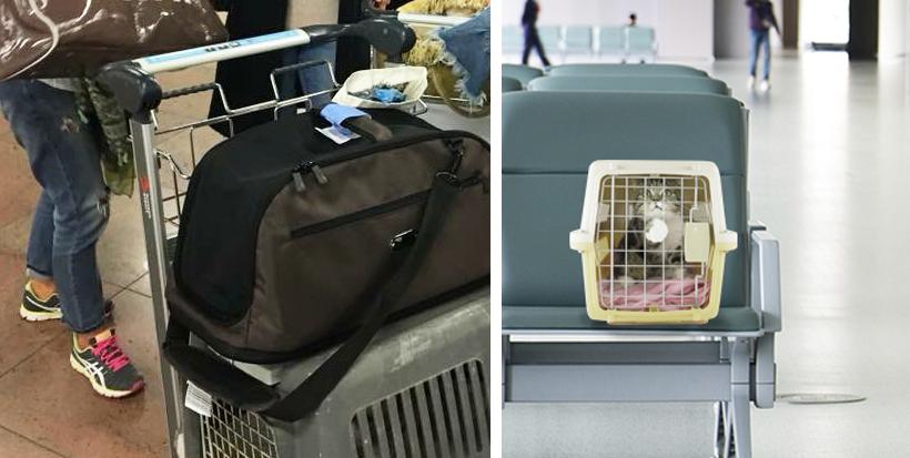 kat op reis op luchthaven