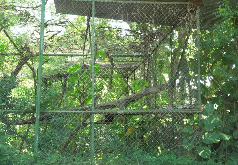 enriched cages in Centro rescate las pumas