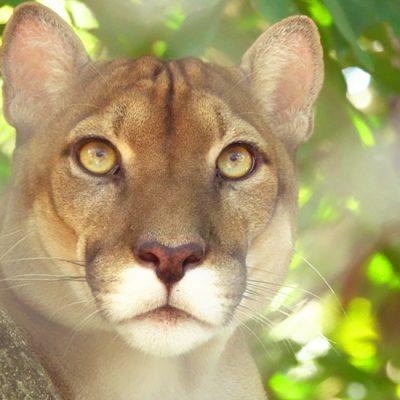 Centro Rescate Las Pumas in Cañas