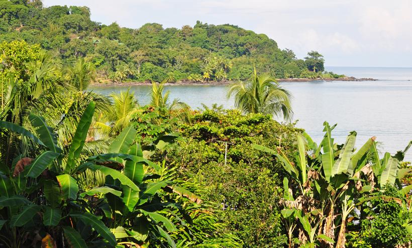 groene jungle in drake bay