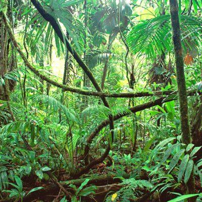 Wandelen in de meest biodiverse plek op aarde: Corcovado