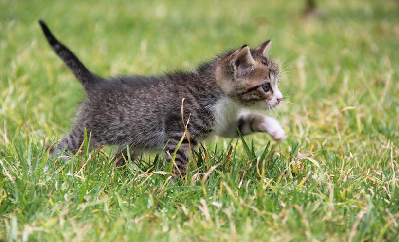 kitten gevonden in tuin
