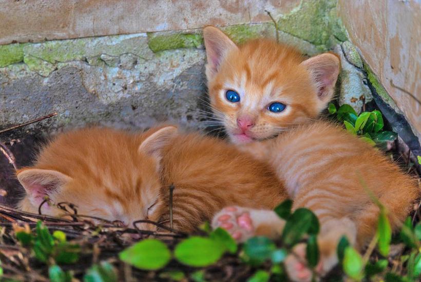 babykittens in tuin gevonden