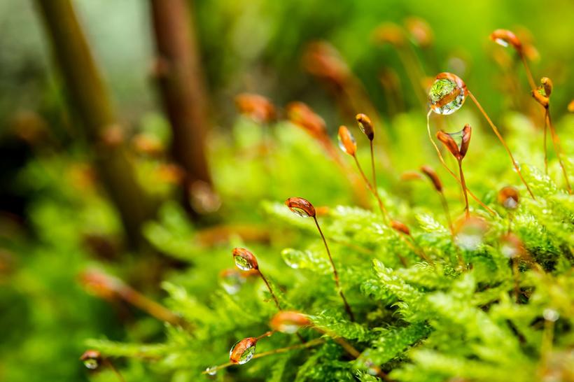 bosbaden planten