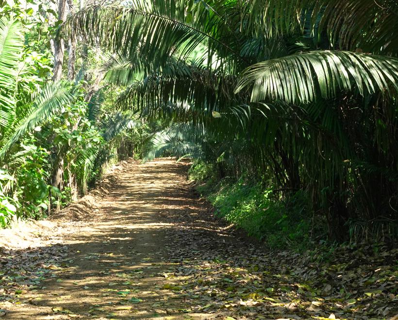onder de bomen van samara naar santa teresa
