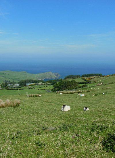 Groene grasvelden met schapen langs de zee in Ierland