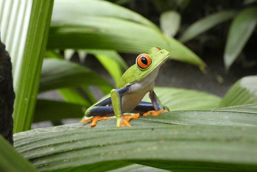 reisvoorbereiding Costa Rica