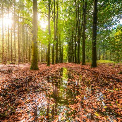 Shinrin-Yoku: de kunst van het bosbaden