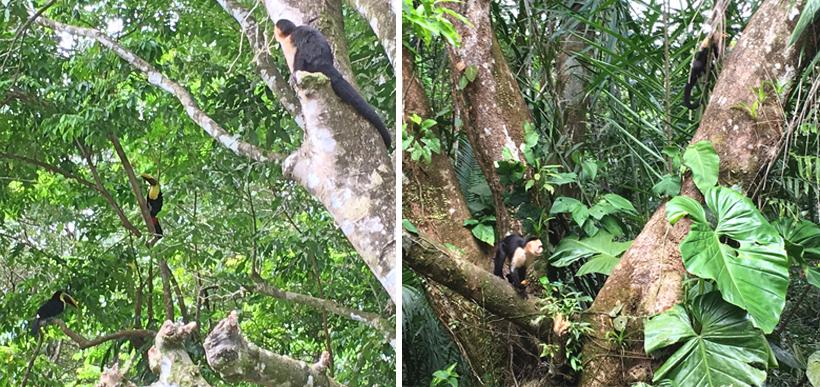 dieren aan de nauyaca watervallen