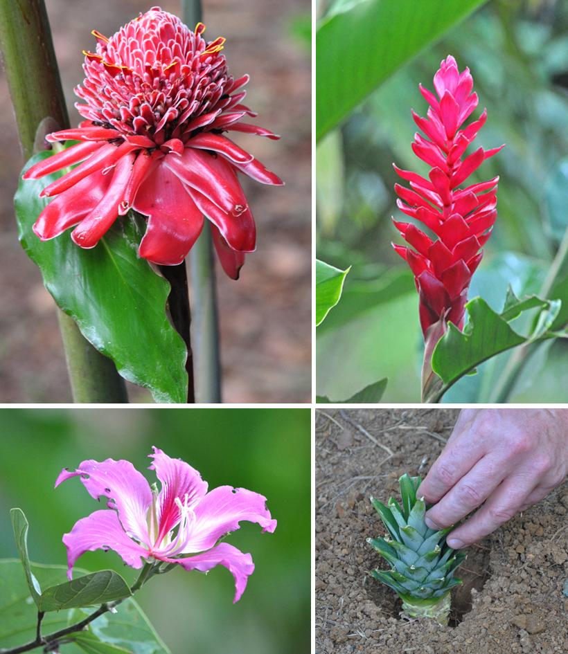 bloemen in de Costa Ballena