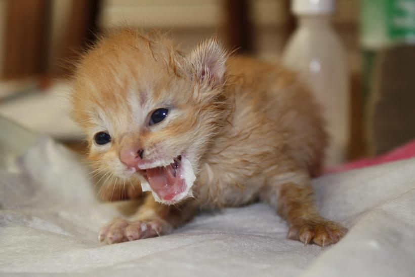 kittens verzorgen en voeden