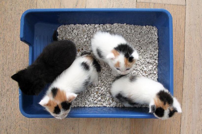kittens verzorgen kattenbaktraining