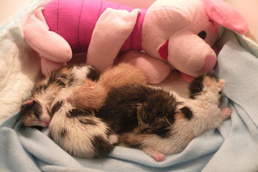babykittens verzorgen in couveuse