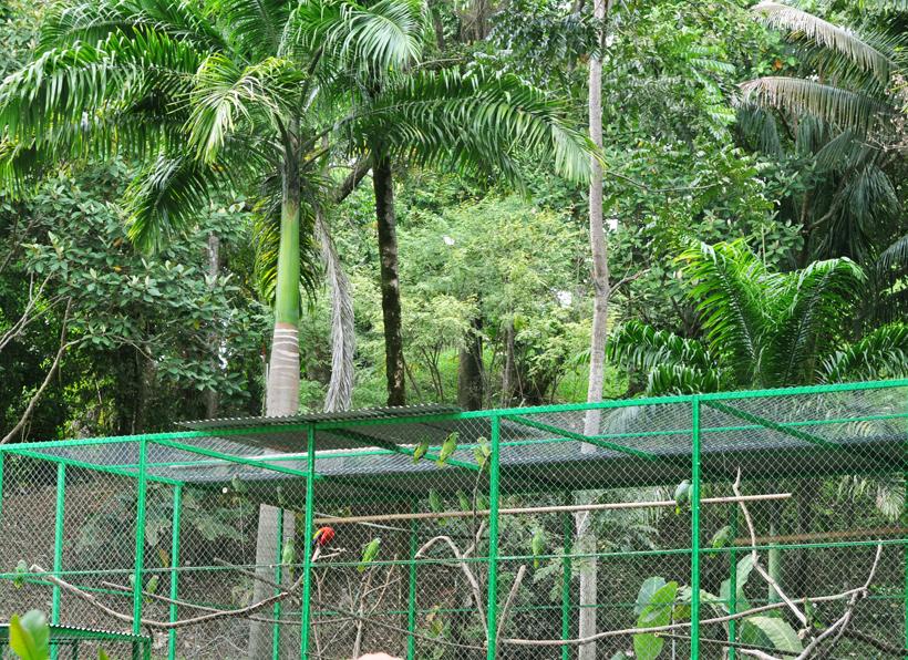 Alturas opvangcentrum dieren in Dominical