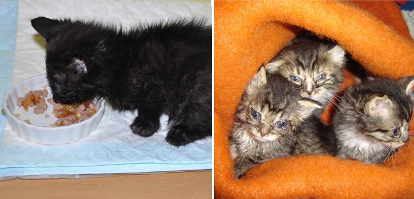 onderkomen kittens verzorgen