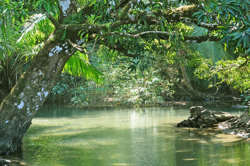 junglerivier met krokodillen
