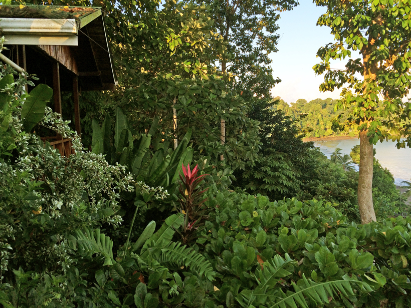 logement op groene helling in Drake Bay