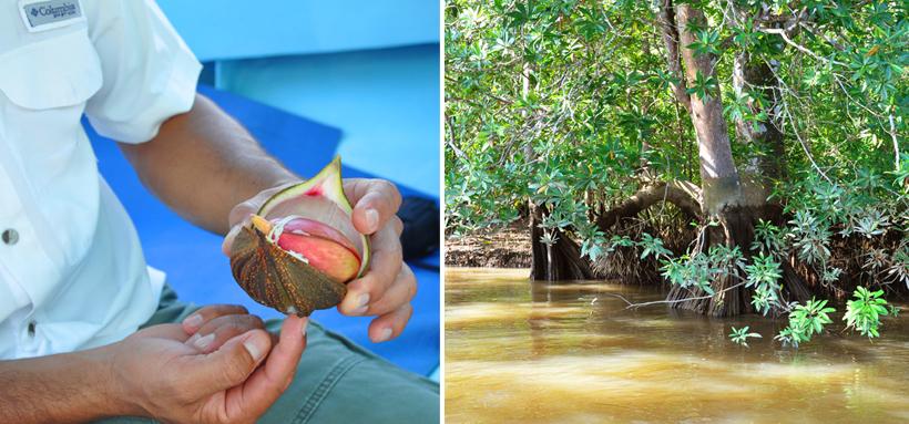 gids legt soorten mangrove uit