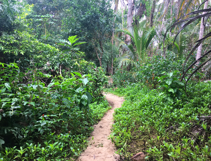 wandelpad in Cahuita nationaal park