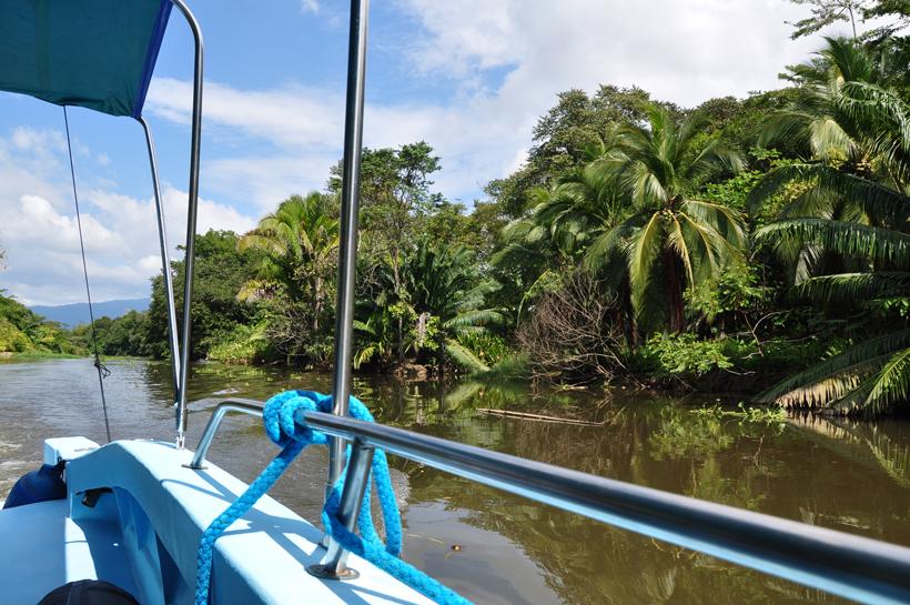 mangrove tour in Sierpe rivier