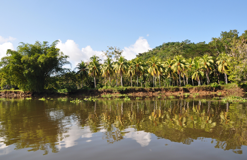 palmbomen langs oevers van de Sierpe rivier