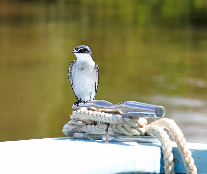 birdwatching Sierpe rivier
