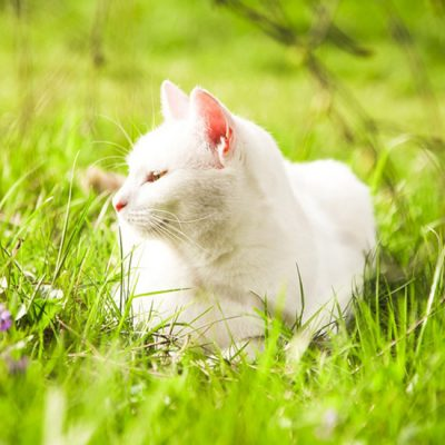 De kat in de zomer: hoe helpen?
