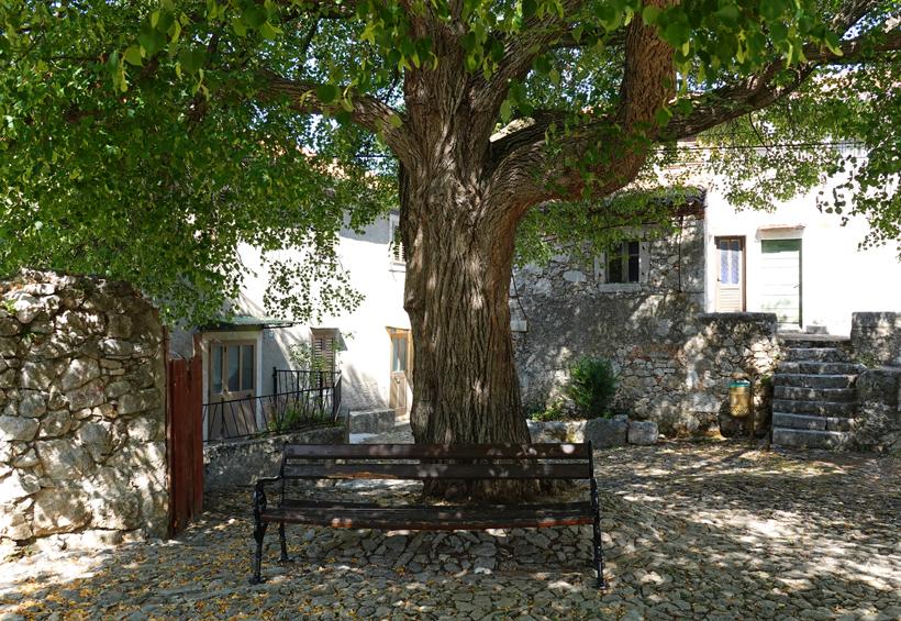 zitbank onder oude boom in Beli