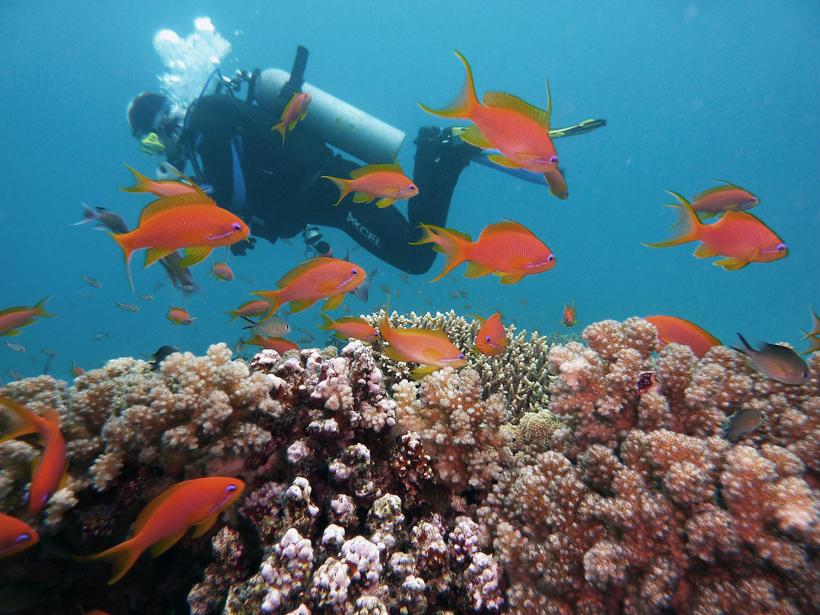 duiken in great barrier