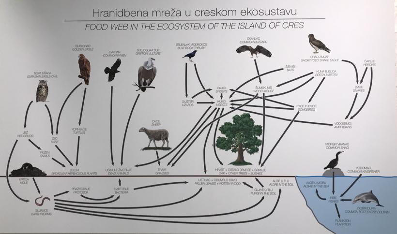 vale gieren en ecosysteem eiland Cres
