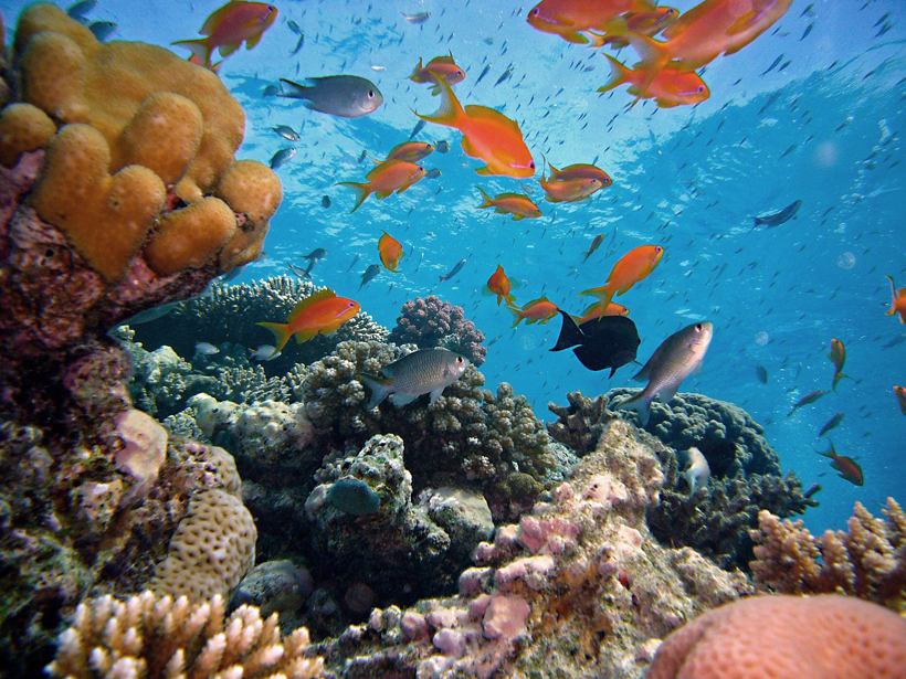 onderwaterwereld great barrier