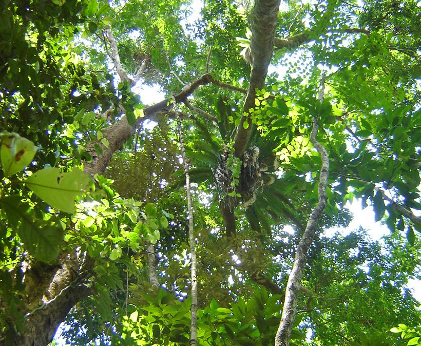regenwoud daintree in tropisch Queensland