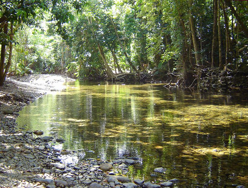 kreek in jungle in tropisch Queensland