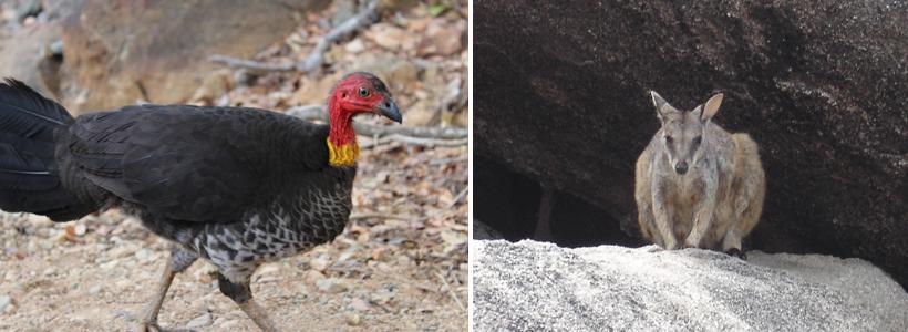 fauna in tropisch Queensland