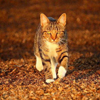 Hoe help je een huiskat of zwerfkat in de winter?