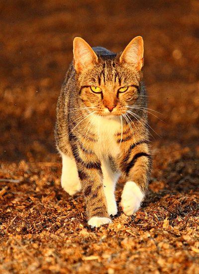 kat in de herfst