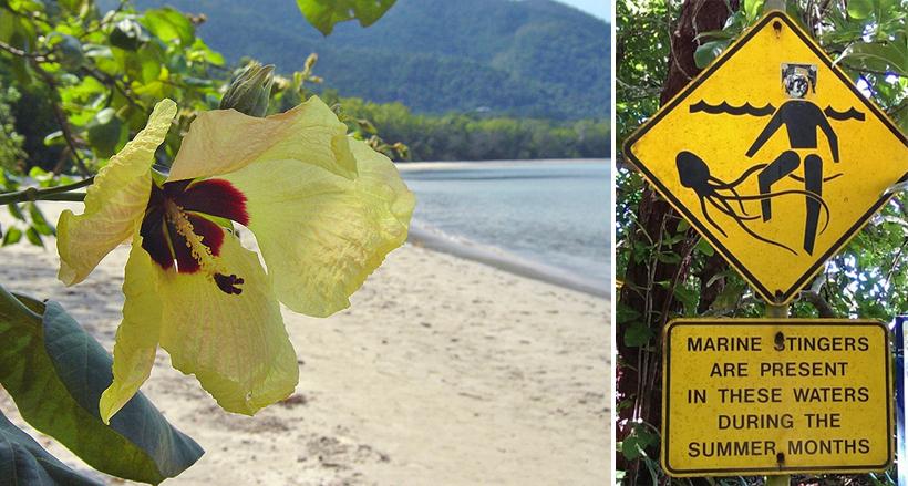 strand en zee vol kubuskwallen in tropisch Queensland