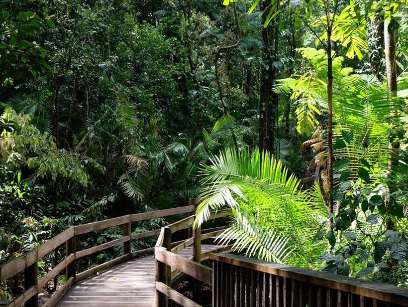 plankenpad in regenwoud tropisch Queensland