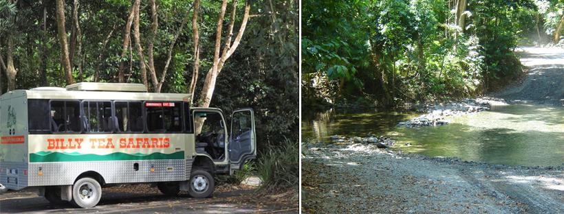 safari in tropisch queensland daintree nationaal park