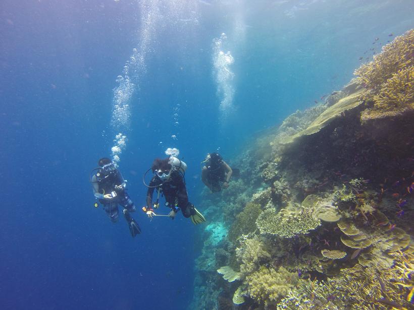 diepzeeduiken in tropisch queensland